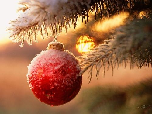 Eventi di Natale a Reggio Emilia Foto